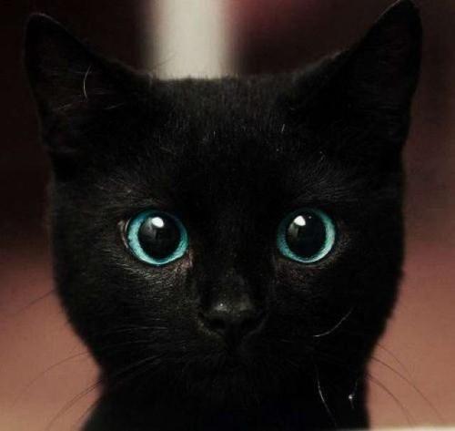 ルドルフとイッパイアッテナ映画化!主題歌は黒猫にピッタリなあの曲!