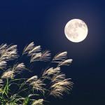 中秋の名月とは?十五夜との違いや読み方。2016年以降はいつ?