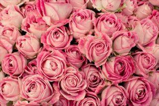 バラの花言葉は本数によって違う?1本の時と2本以上の時はどう違うのか?プレゼントに使う時の例も