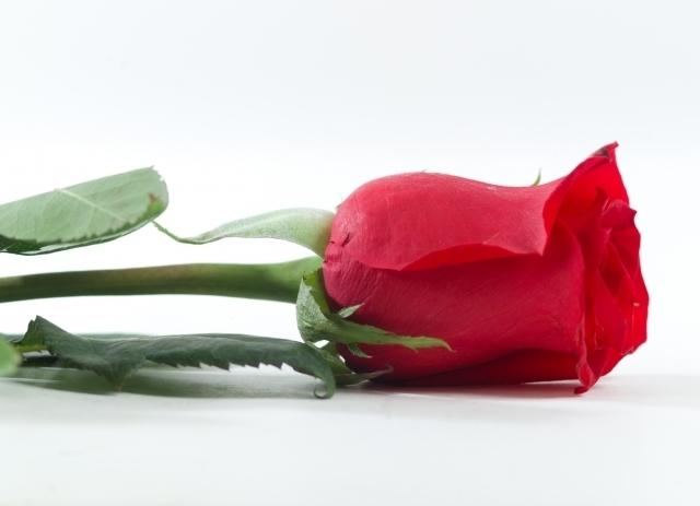 バラ,花言葉,本数,違う,1本,2本,プレゼント,例