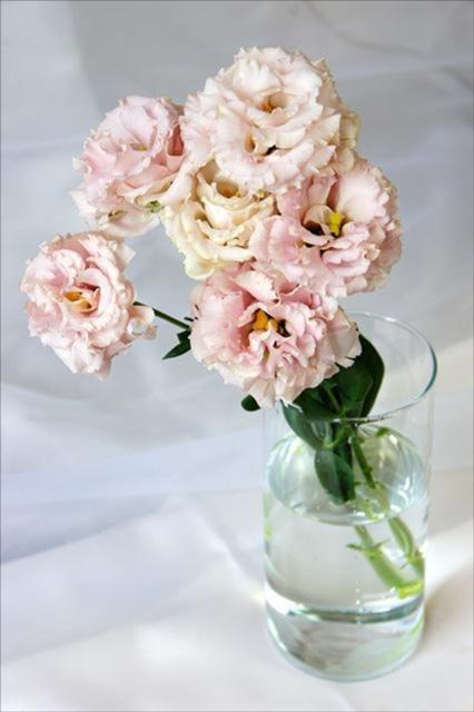 梅雨,プレゼント,おすすめ,花,名前,花言葉,結婚式