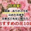 【花言葉】感謝・ありがとうを込めた花束を卒業式で先生に贈ろう!おすすめの花10選